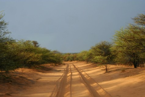 Sand Tracks in Mabuasehube Game Reserve.JPG