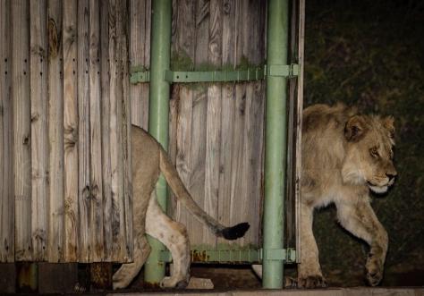 LionsShower-5534.jpg